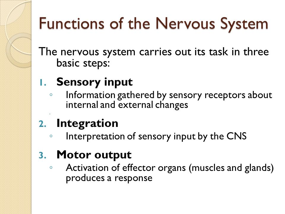 the main functions of the nervous system The peripheral nervous system is divided into two major parts: the somatic nervous system and the autonomic nervous system somatic nervous system the somatic nervous system consists of peripheral nerve fibers that send sensory information to the central nervous system and motor nerve fibers that project to skeletal muscle.