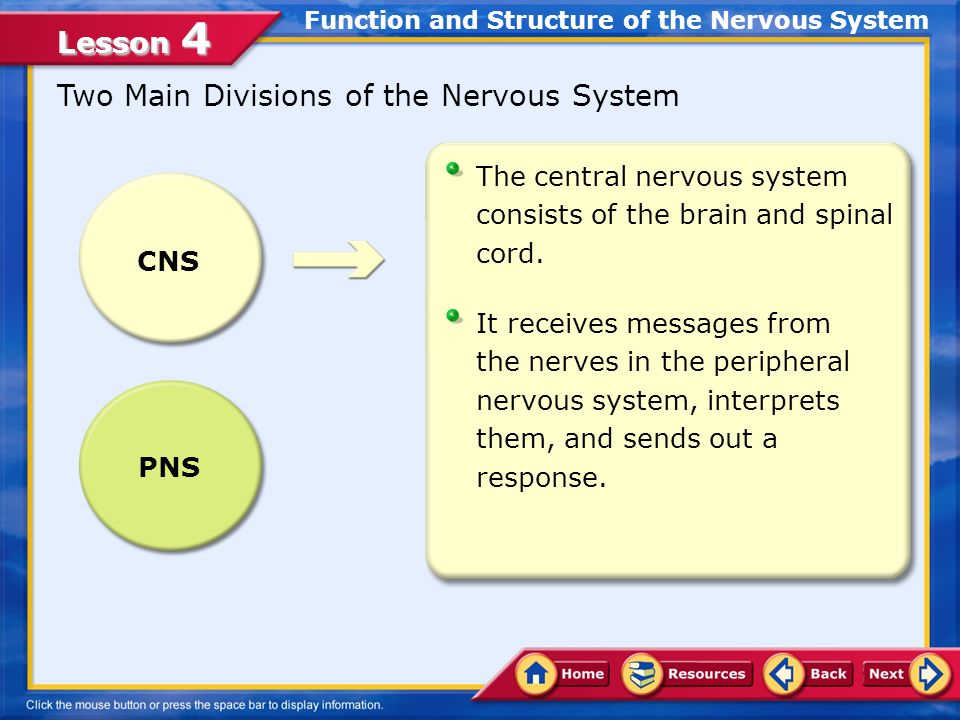 Function and Structure of the Nervous System