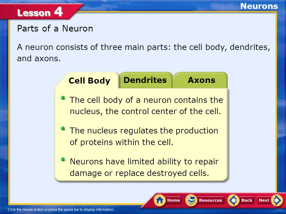 Parts of a Neuron Neurons