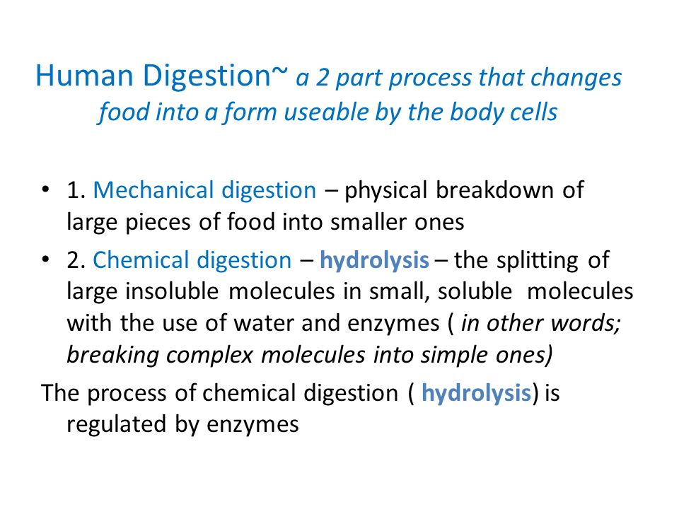human digestion -ch section objectives: - ppt download, Cephalic Vein
