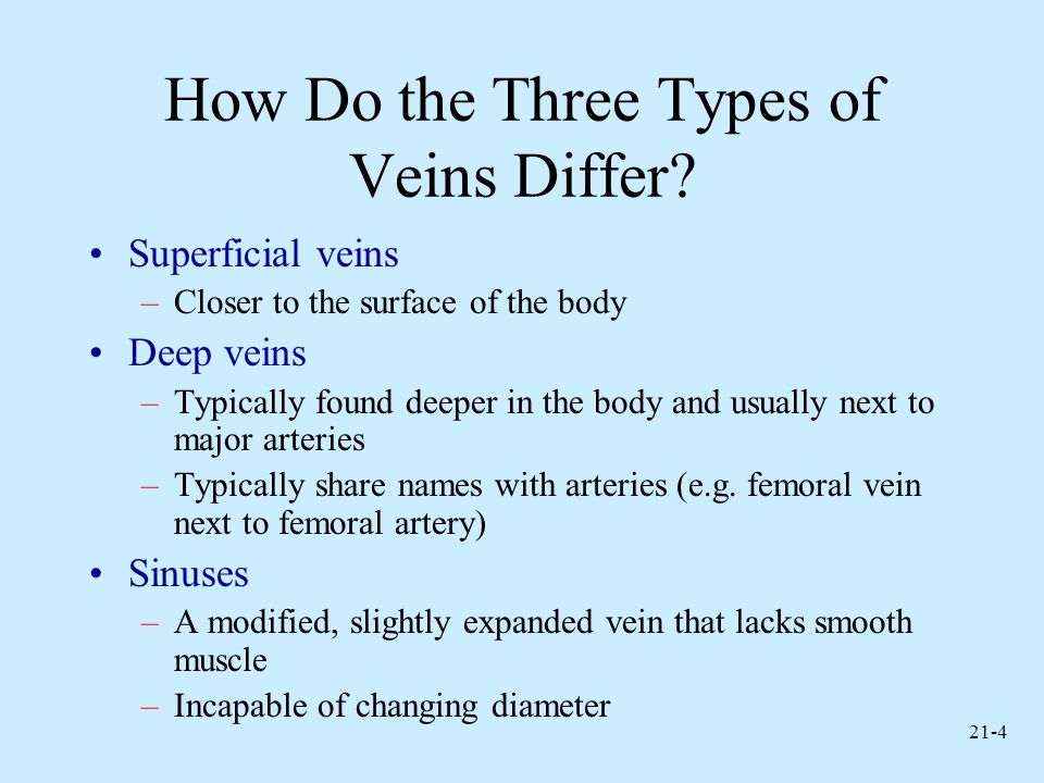 How Do the Three Types of Veins Differ