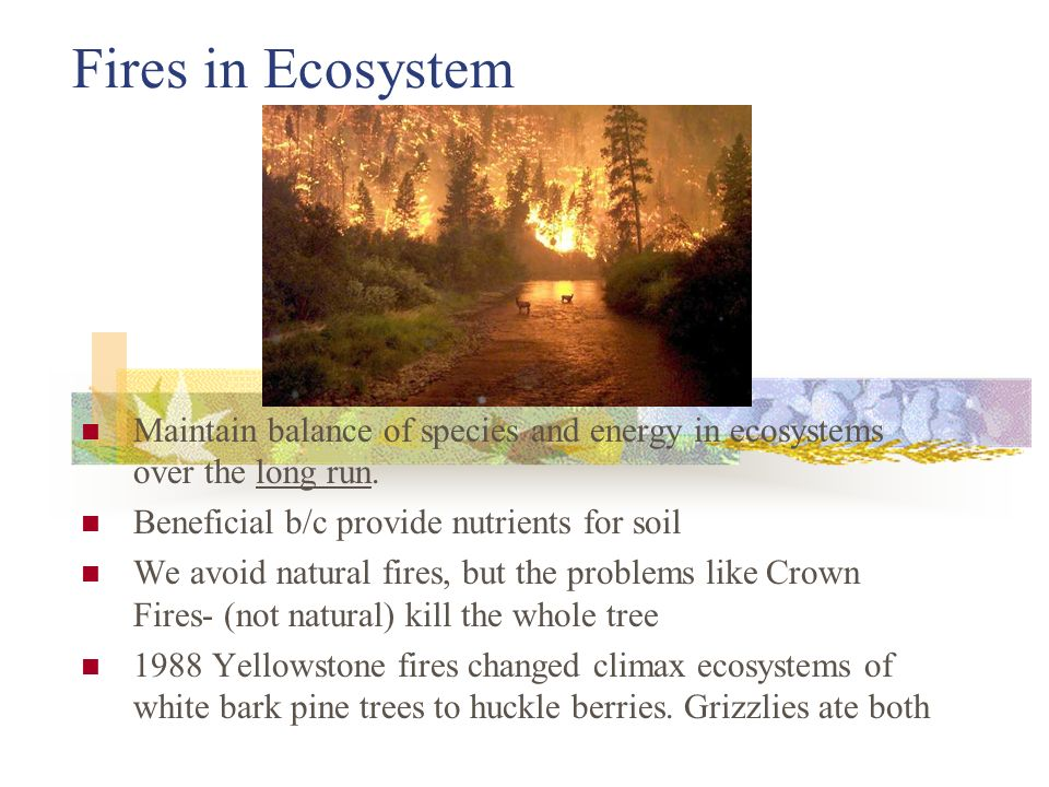 Ecosystem is dependent on succession essay