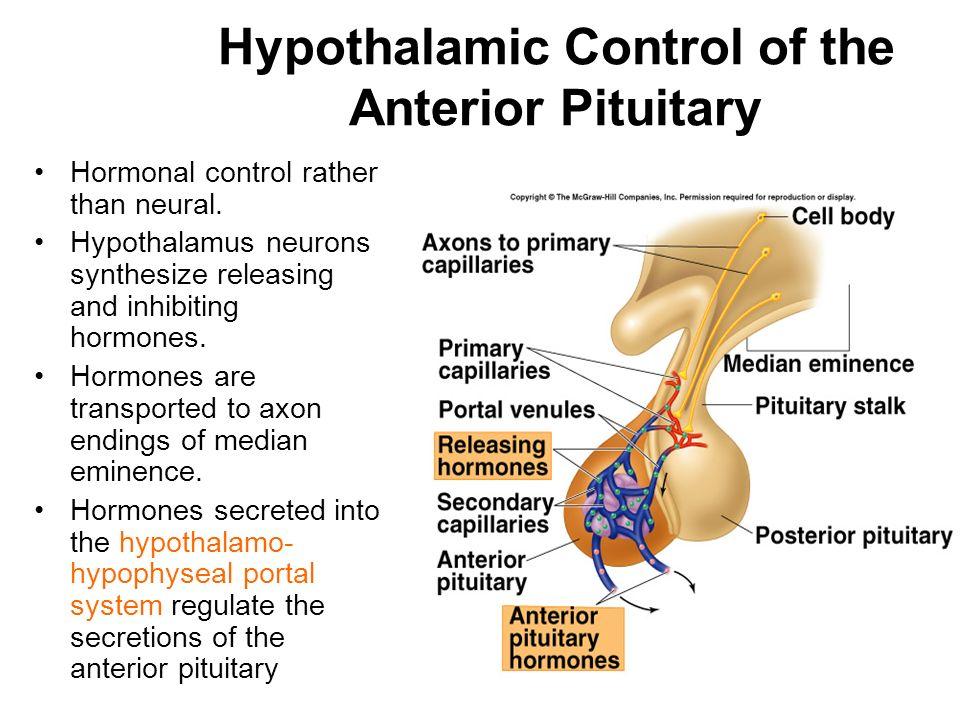 pdf development of the neuroendocrine hypothalamus
