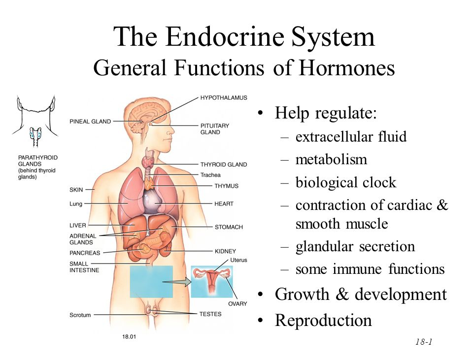 The Endocrine System General Functions of Hormones - ppt video ...