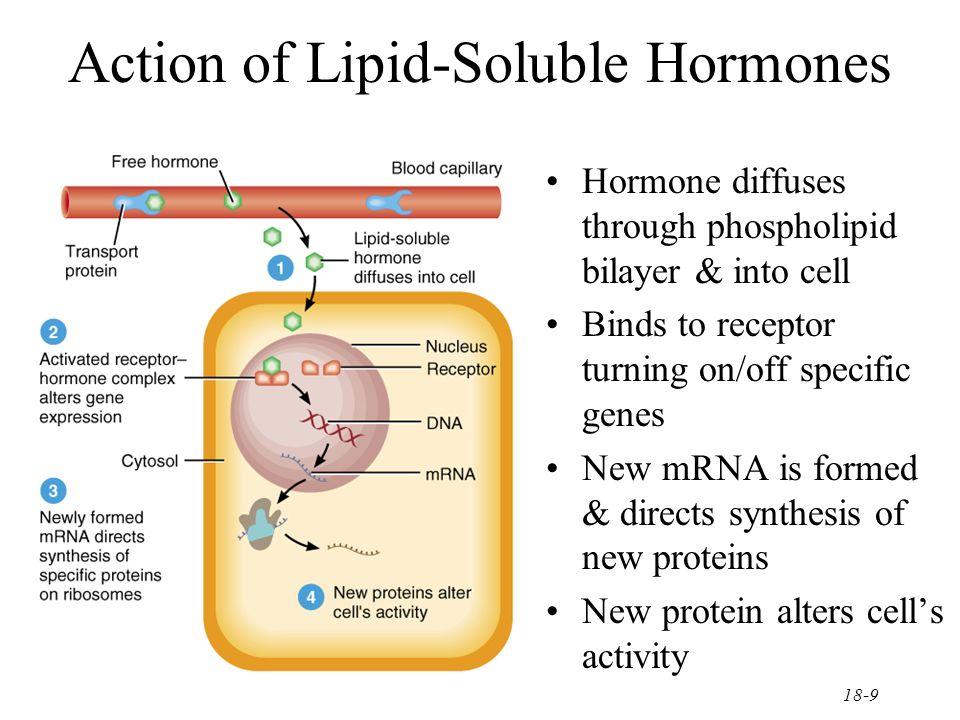 lipids lipid and positive result Lipid tests with sudan iii think about this result and where cholesterol is present in eggs to explain how which of the substances tested positive for lipids.
