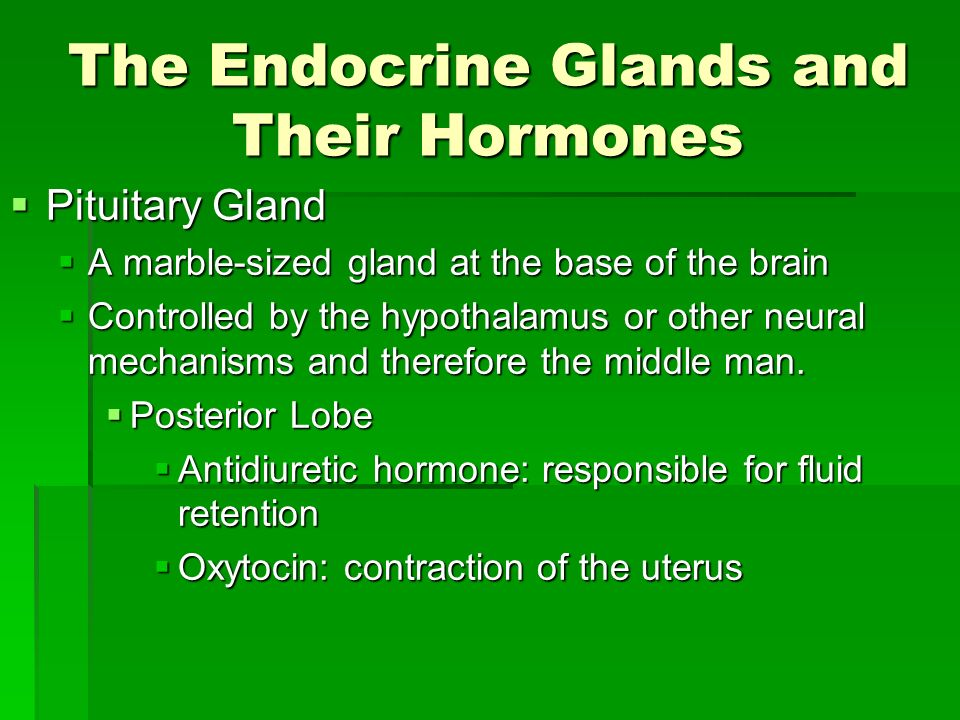 The Endocrine System Ppt Download