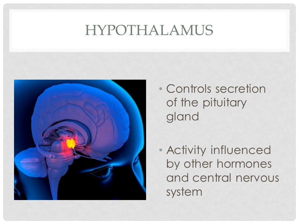 Hypothalamus Controls secretion of the pituitary gland