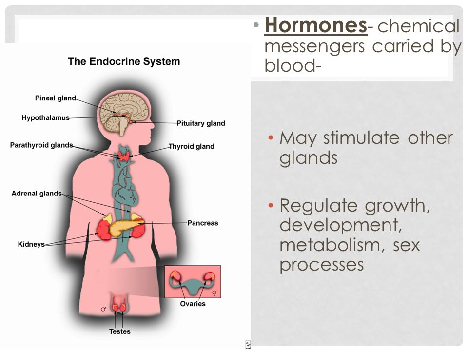 Hormones- chemical messengers carried by blood-