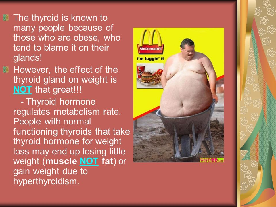 The thyroid is known to many people because of those who are obese, who tend to blame it on their glands!