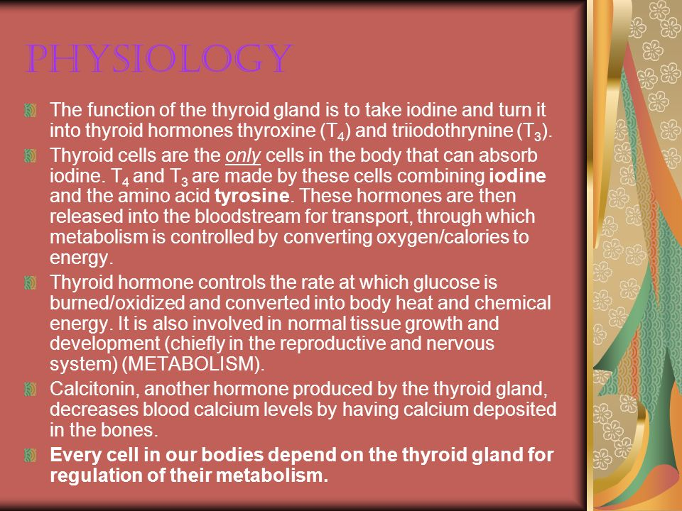 Physiology The function of the thyroid gland is to take iodine and turn it into thyroid hormones thyroxine (T4) and triiodothrynine (T3).