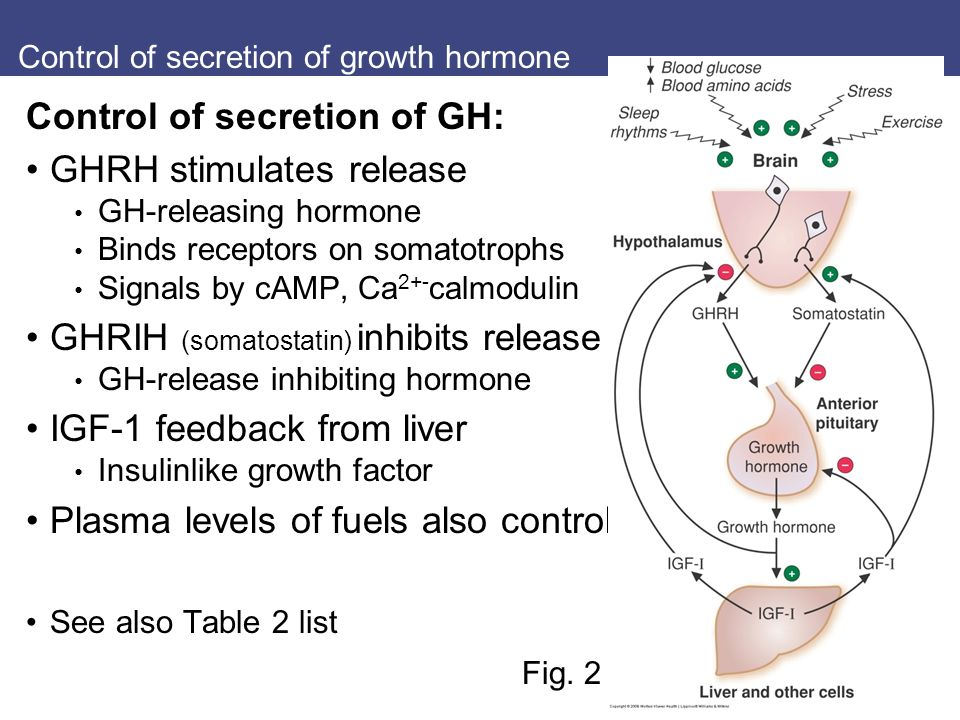 the study of various factors that stimulates insulin secretion Glucose-stimulated insulin secretion: a newer perspective amino acids and glucose generate metabolic amplification factors than these other two systems in addition, the time frames of insulin secretion and neurotransmitter release are different: insulin secretion is tuned over.