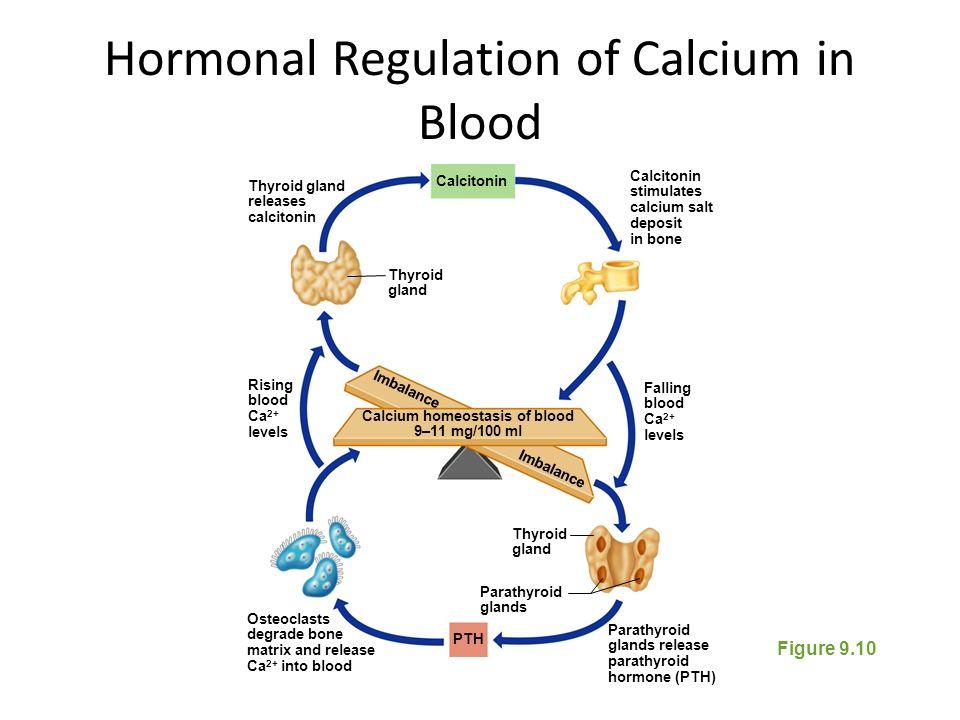 calcium homeostasis and hormonal regulation Endocrinology - calcium and phosphate regulation adrenal gland hormones - duration: blood calcium homeostasis - duration:.