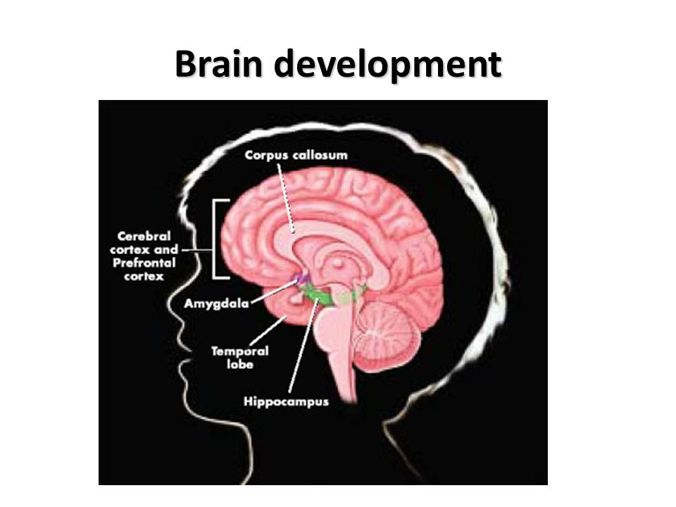 Teen brain development facts