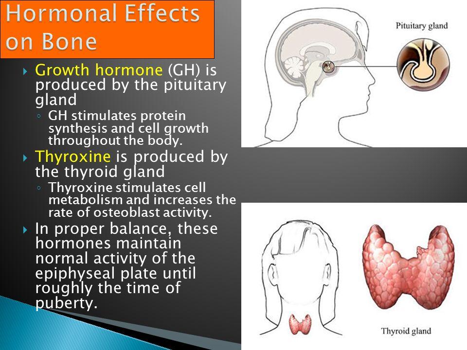 Growth hormone thyroxine and sex hormones