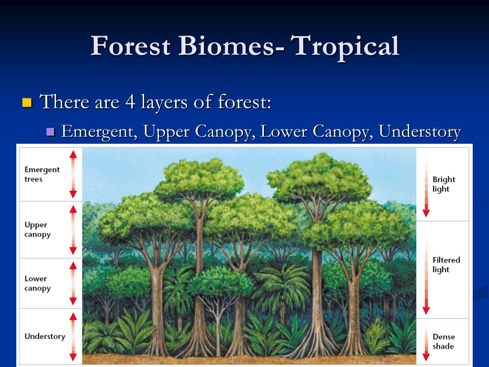 Forest Biomes- Tropical  sc 1 st  SlidePlayer & Biomes Chapter ppt download