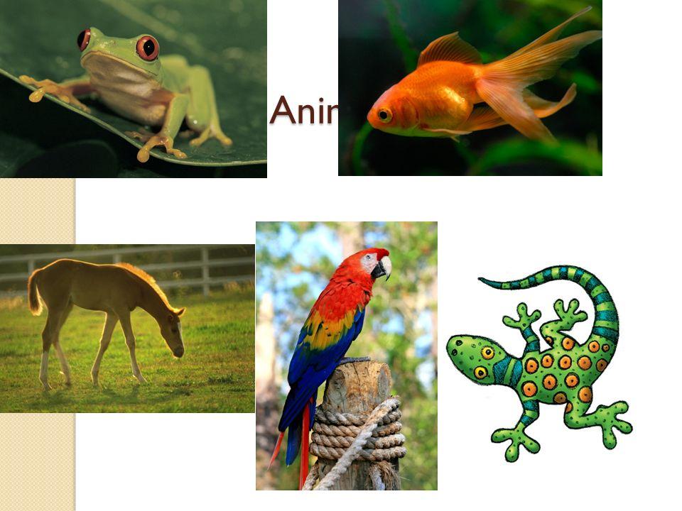Image of: Biology Kingdom Animalia Pinterest Kingdom Animalia Ppt Video Online Download