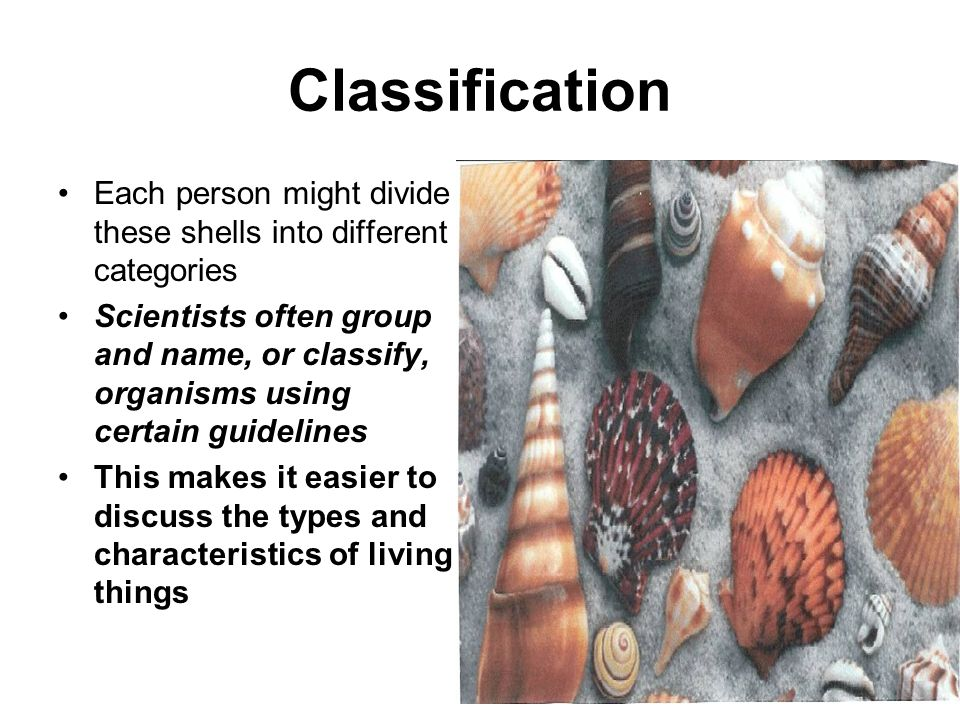 Classification Each person might divide these shells into different categories.