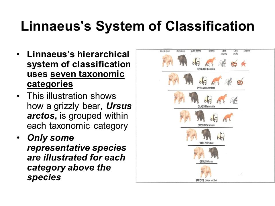 Linnaeus s System of Classification