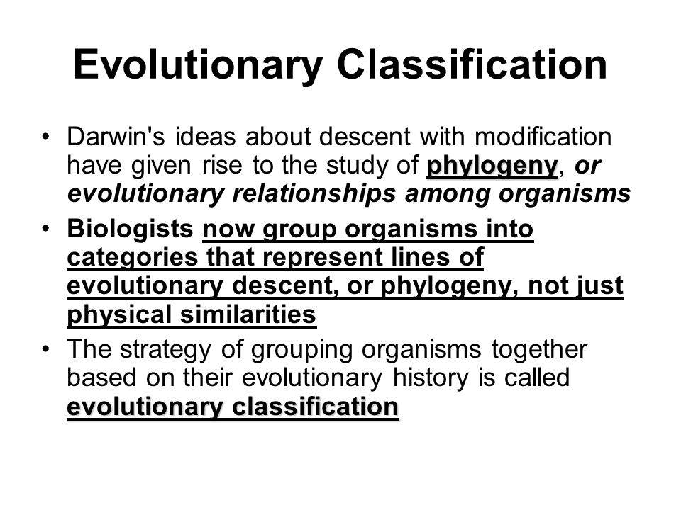 Evolutionary Classification
