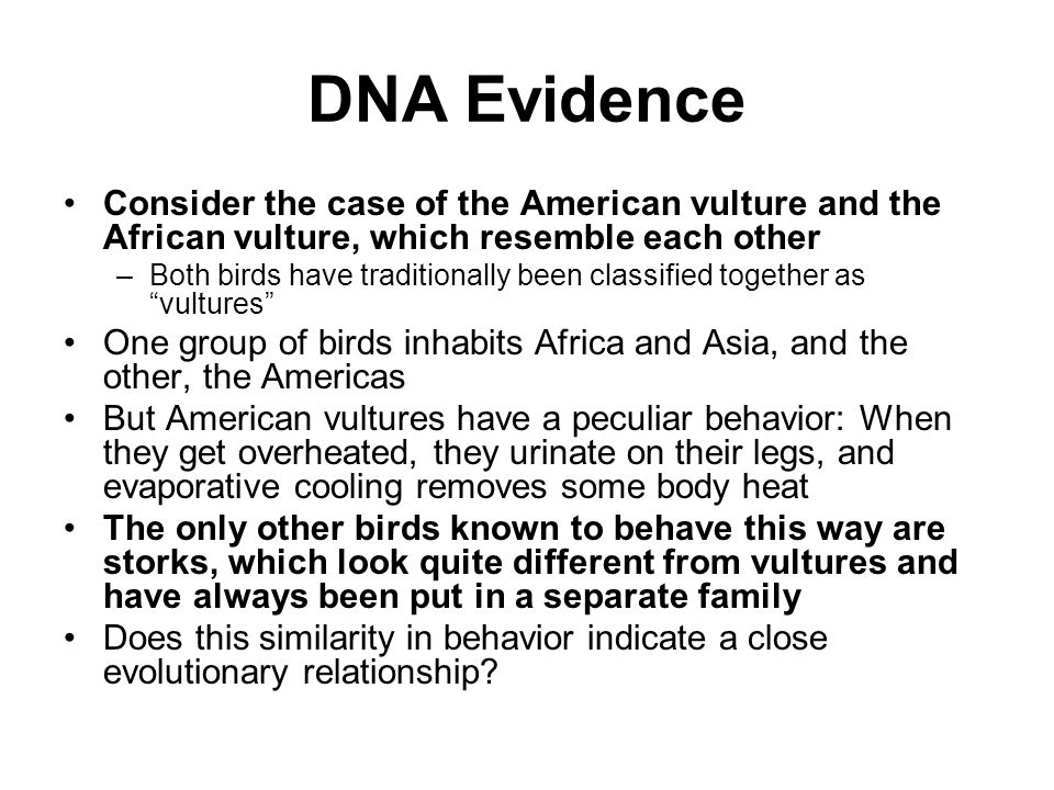 DNA Evidence Consider the case of the American vulture and the African vulture, which resemble each other.