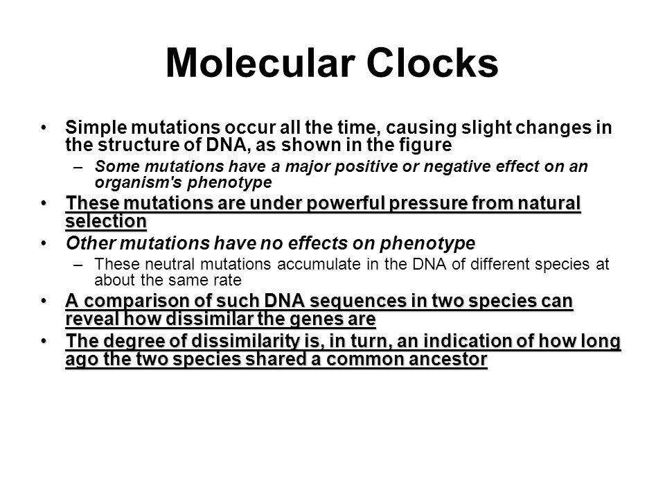 Molecular Clocks Simple mutations occur all the time, causing slight changes in the structure of DNA, as shown in the figure.