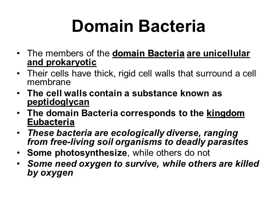 Domain Bacteria The members of the domain Bacteria are unicellular and prokaryotic.