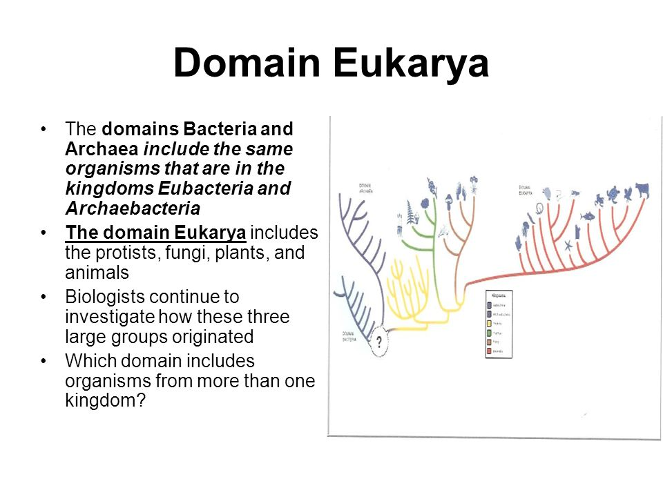 Domain Eukarya The domains Bacteria and Archaea include the same organisms that are in the kingdoms Eubacteria and Archaebacteria.