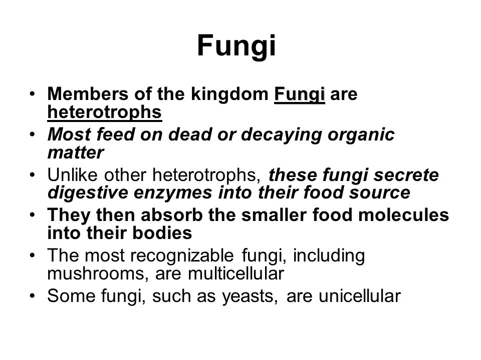 Fungi Members of the kingdom Fungi are heterotrophs