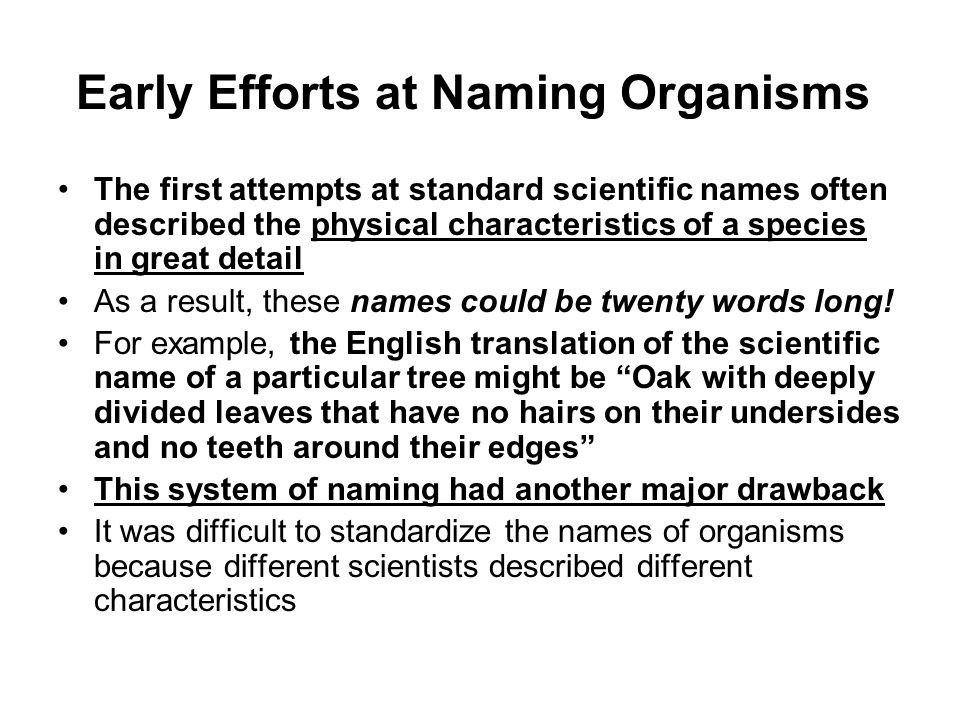 Early Efforts at Naming Organisms
