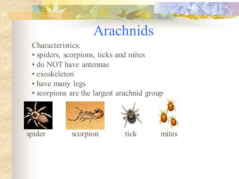 "the main characteristics of the spider How to identify a garden spider  know what a garden spider is here are some key characteristics physical features: females are 3/4 to 1 1/8"" (19-28 mm) ."