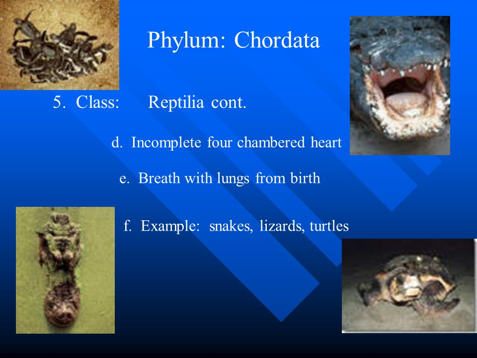 Classification of Organisms - ppt video online download