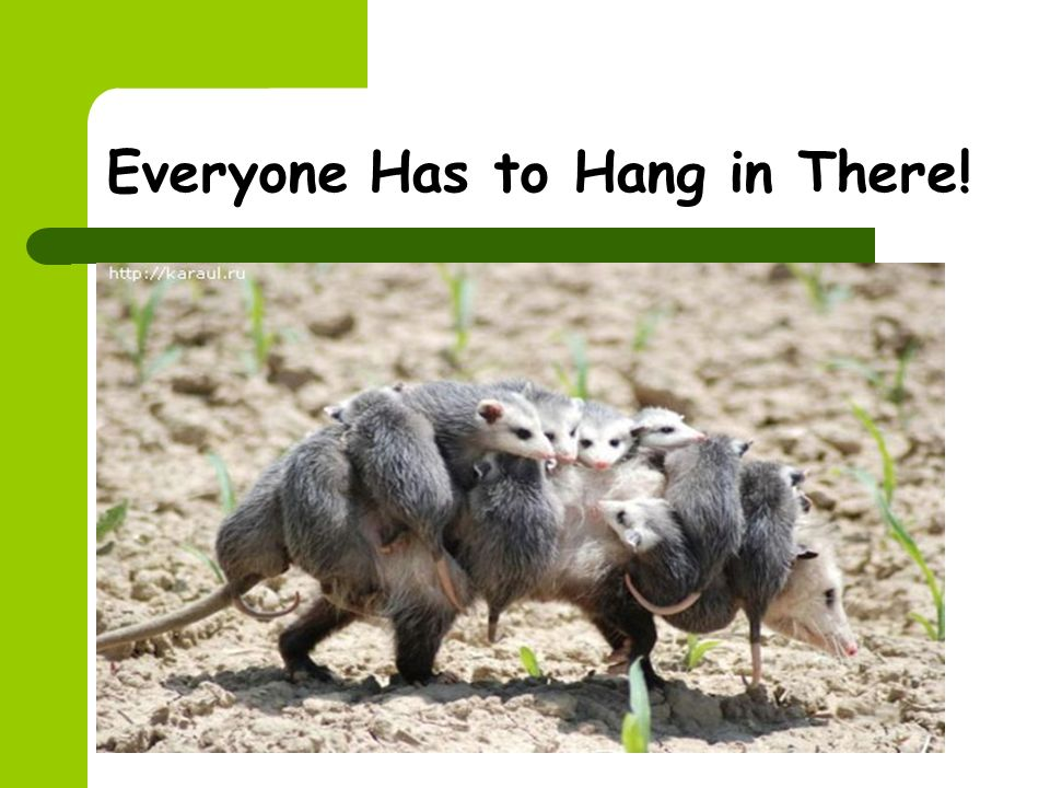Everyone Has to Hang in There!