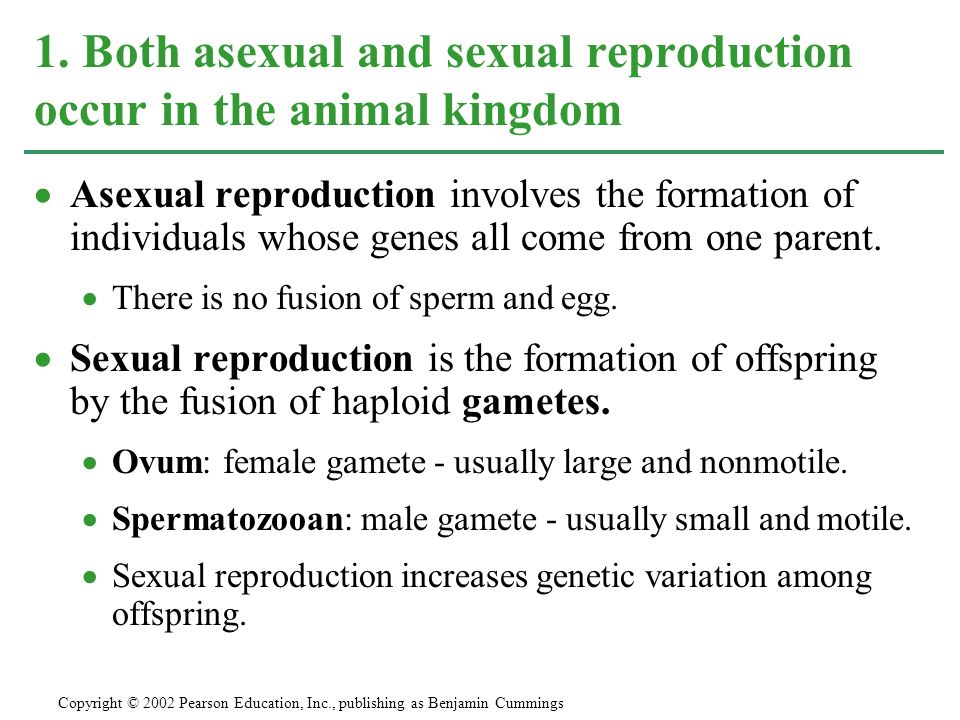 Service provision change fragmentation asexual reproduction