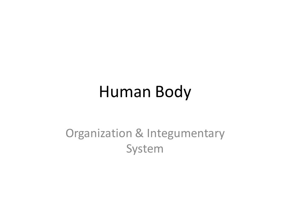 Body organization and the integumentary skeletal Term paper Service ...