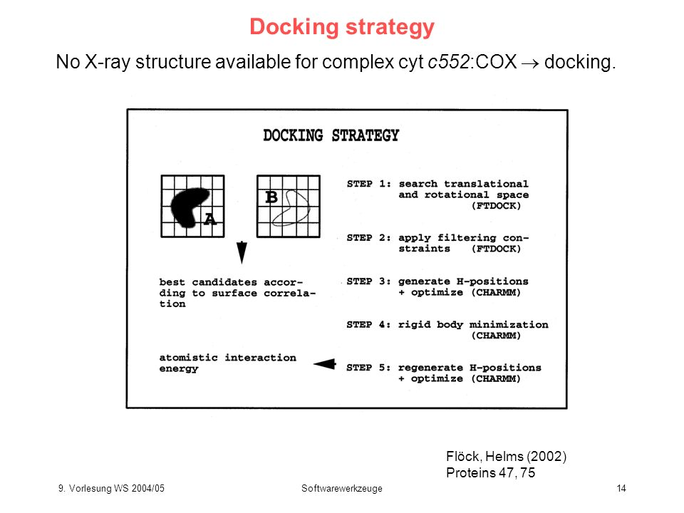 Docking strategy No X-ray structure available for complex cyt c552:COX  docking. Flöck, Helms (2002)