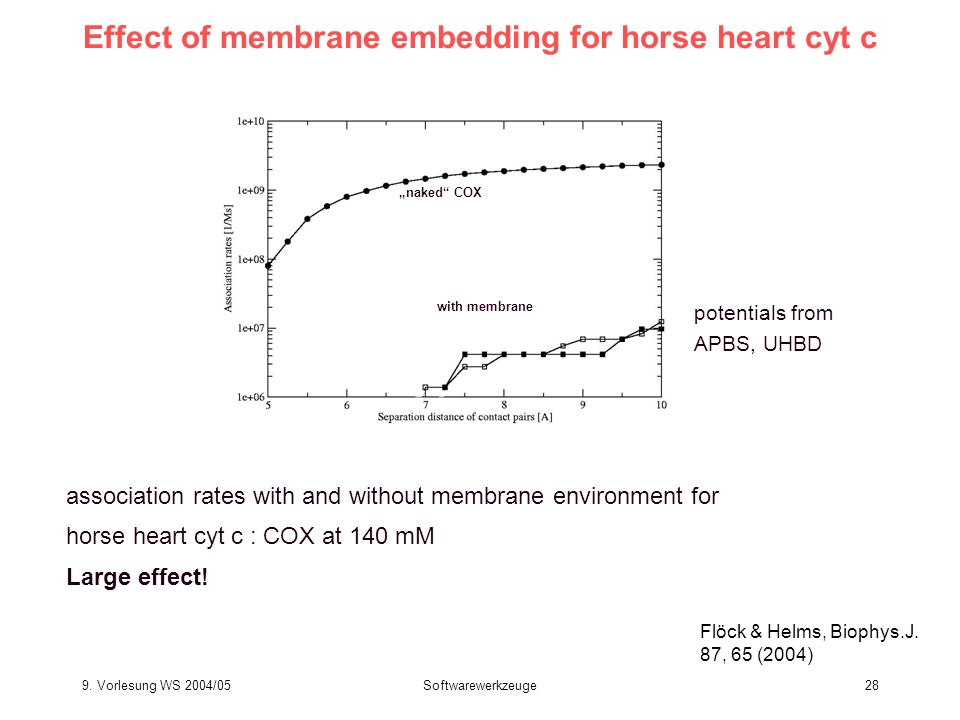 Effect of membrane embedding for horse heart cyt c