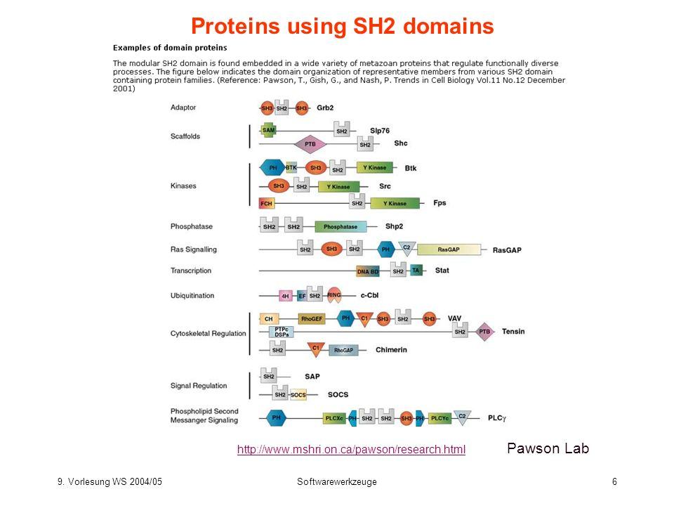 Proteins using SH2 domains