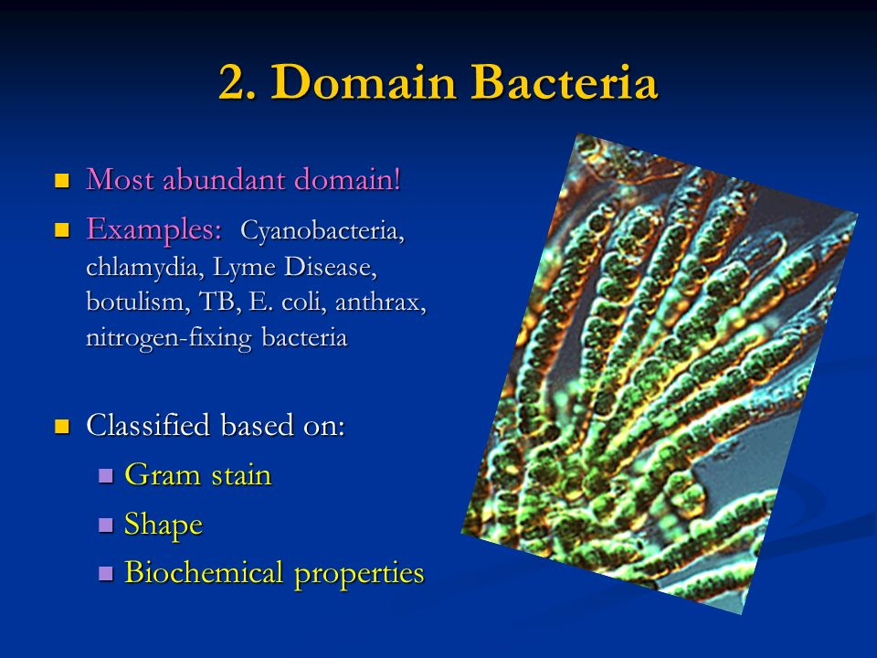 Bacteria Chapter ppt download