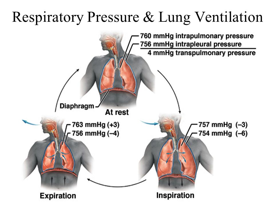Lung Ventilation System : Chapter respiratory system ppt video online download