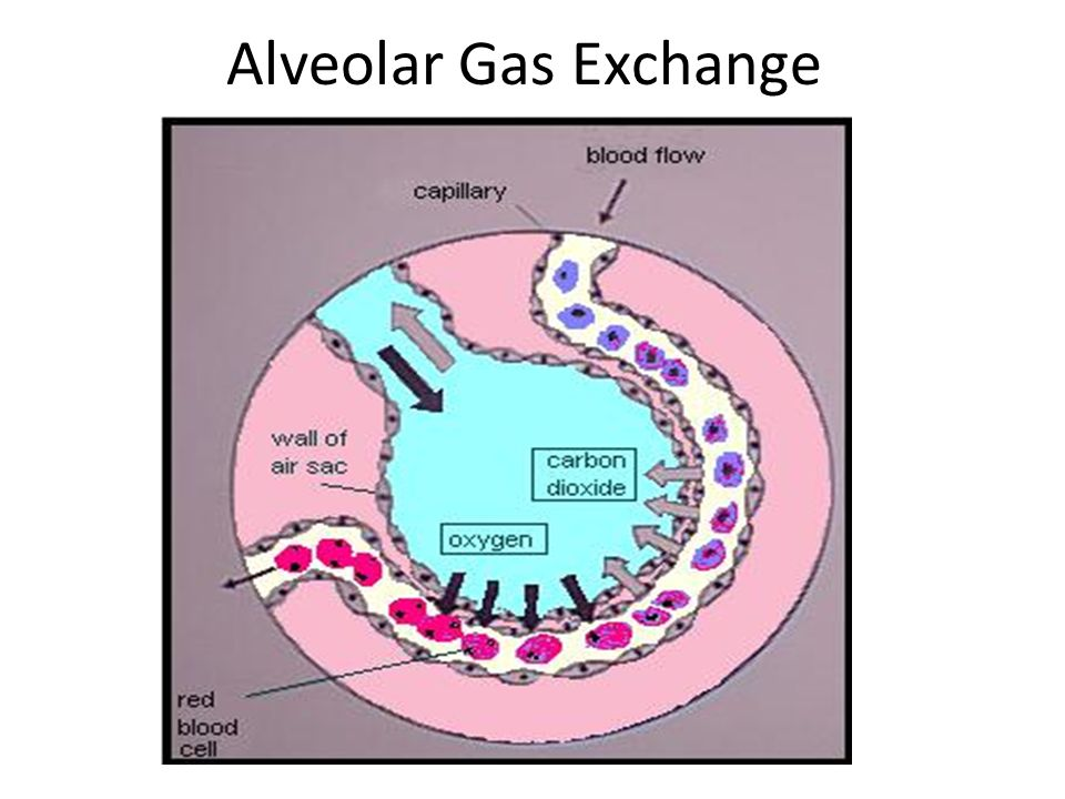 gas exchanges 2: which of the following statements about partial pressures of gases is true a) p o2 in lung is greater than p o2 in blood p co2 in lung is greater than p co2 in.