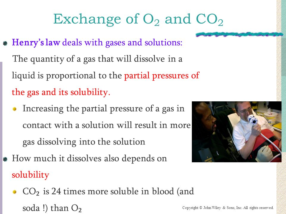 gas and solute exchange The lack of representation of physical effects on gas exchange at the swi  can  be interpreted as the sediment flux when the solute transport.