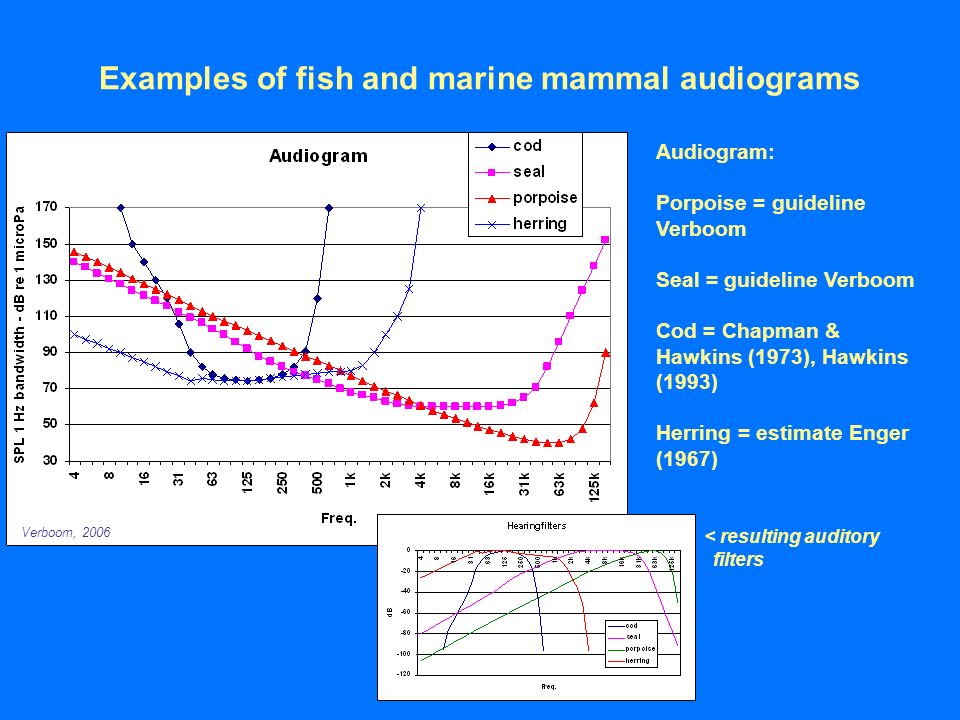 Underwater noise from maritime sources and impact on for Examples of fish