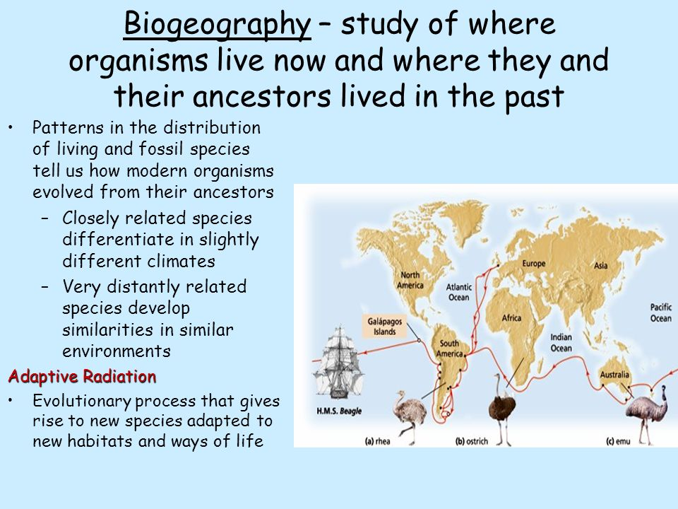 Biogeography -the study of where organisms live ...