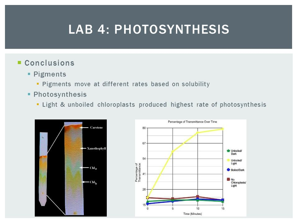 ... Lab 4 Photosynthesis Essay 2004 Ap Biology Lab Review 1 4   Download As  Powerpoint ...
