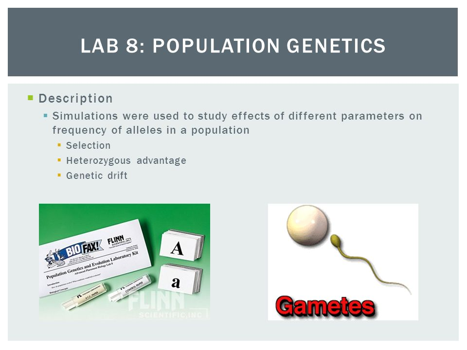 population genetics lab Population genetics resources to enlarge the resources for access to  descriptions and links, please click on the title of the resource the links on this  page will.