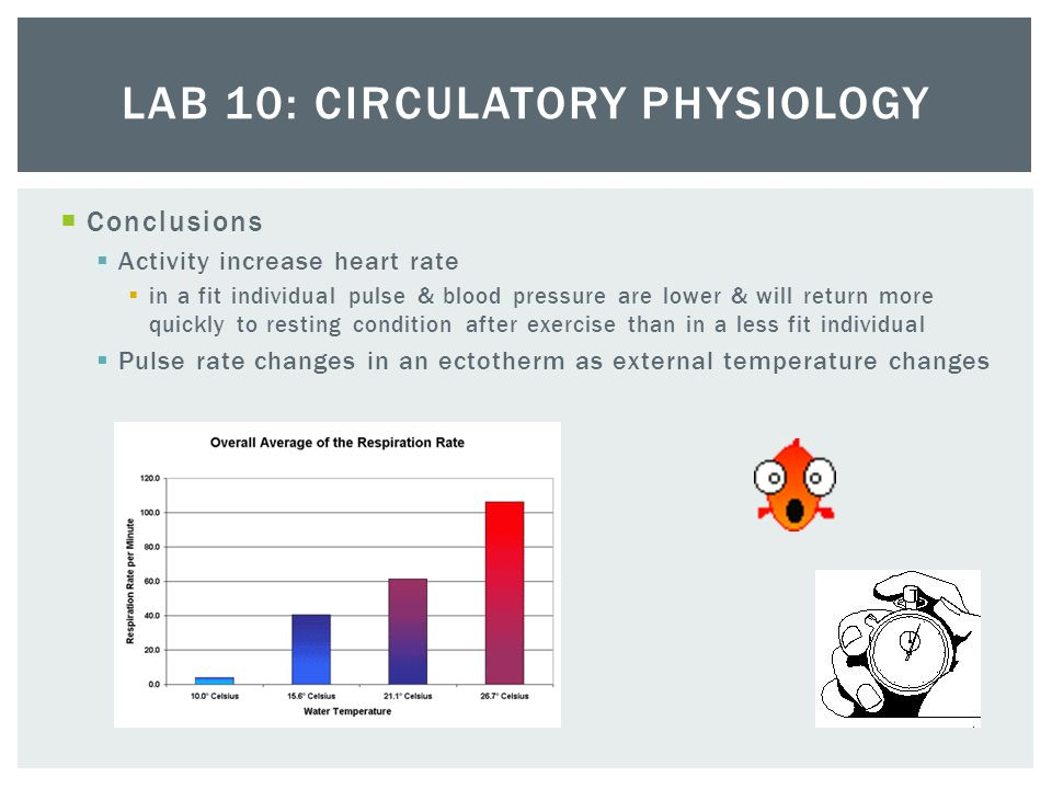 pulse rate after exercise essay Free essay: investigating the effect of exercise on pulse rate aim: to see what happens to the pulse rate during exercise prediction: i predict that the.