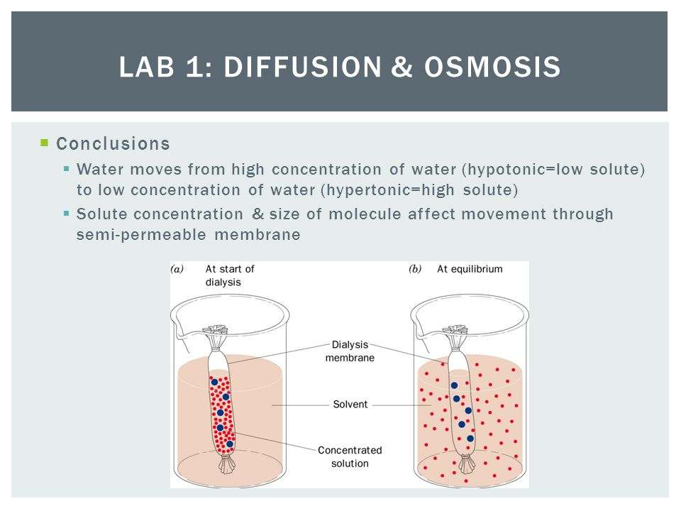 osmosis experiment conclusion