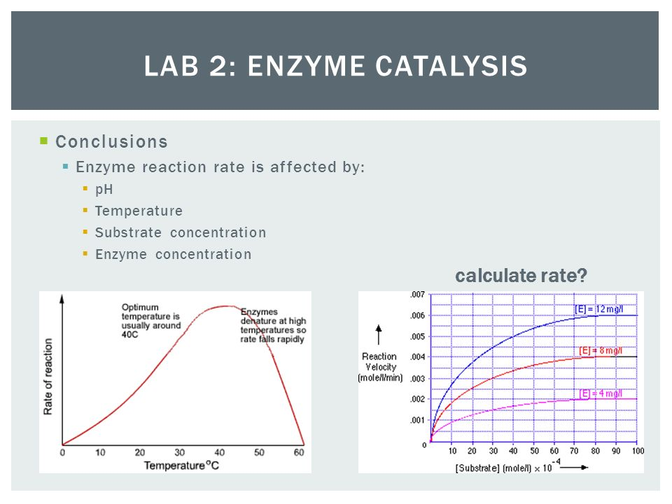 ap bio lab 2 enzyme Ap lab #2: enzyme catalysts introduction: enzymes are catalytic proteins, meaning they speed up – but do not create – chemical reactions, without being used up or altered permanently in the process.