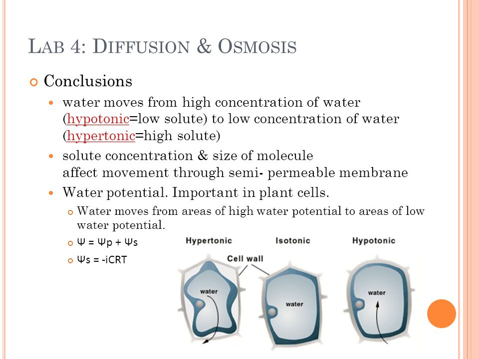 osmosis water potential lab Living cells experiment  to carry out this type of experiment, you need to:  the  minus sign shows that it has lost mass - it will have lost water by osmosis.