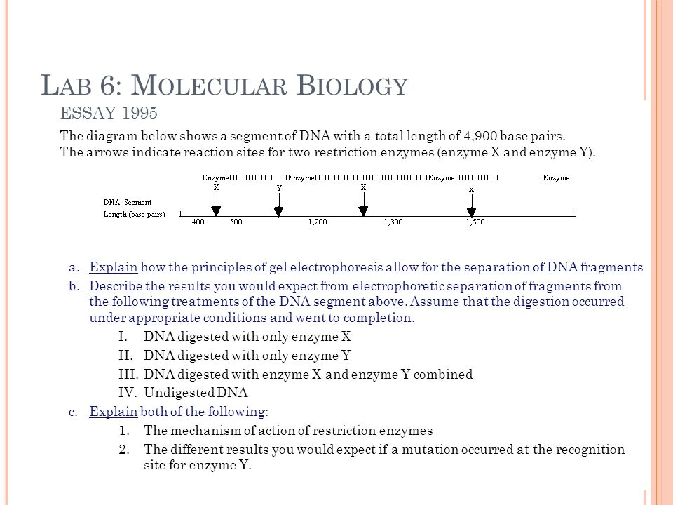 dna digestion and electrophoresis essay Dna fingerprinting using restriction enzymes digestion of dna by a restriction enzyme will produce dna after electrophoresis, dna fragments in.